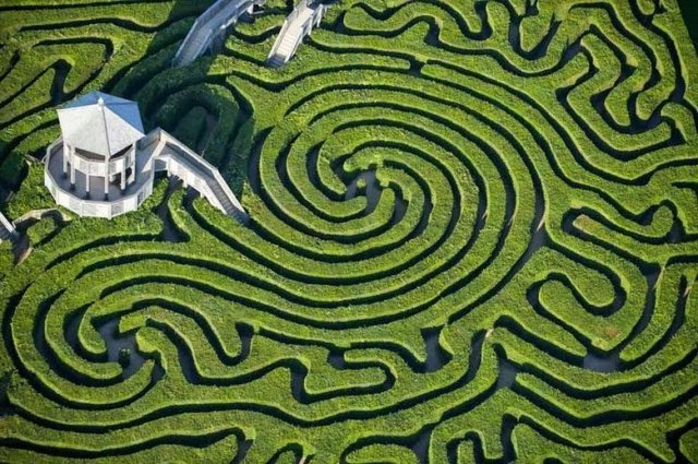 image of hedge maze